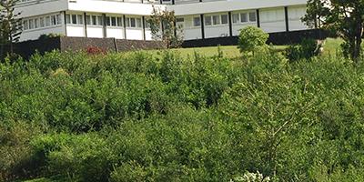 Poly Clonal Seed Gardens